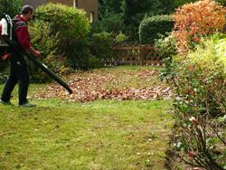 Laubbeseitigung mit dem Laubgebläse